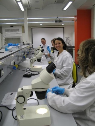 Volunteers analysing horseshoe bat droppings in the laboratory