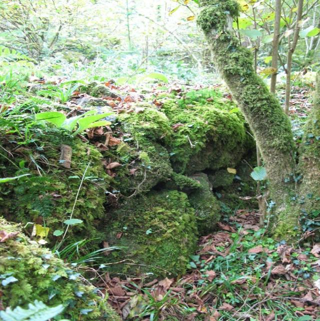 Ancient stone boundary