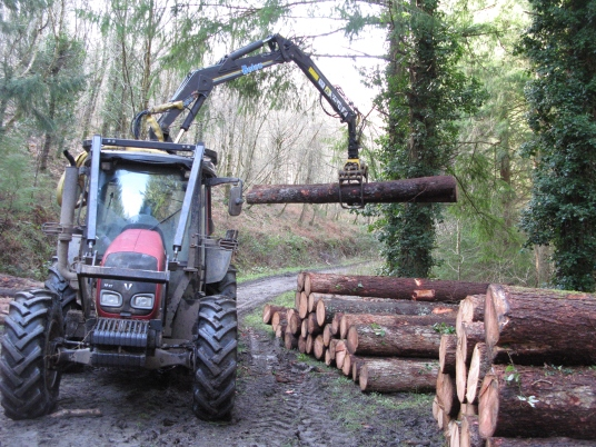 Logs stacked ready for milling