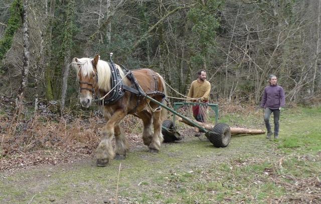 Horselogging2 (2)