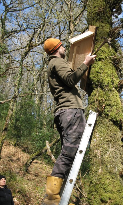 Andy Carr finds the ideal location for a bat box