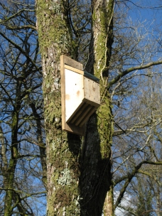 A new roost for the barbastelles