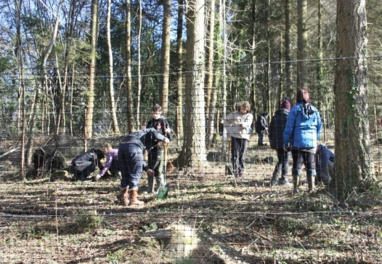 Students planting trees behind a mesh fence in Pullabrook Woods