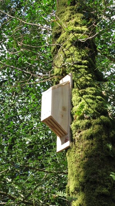 Solar heated bat box