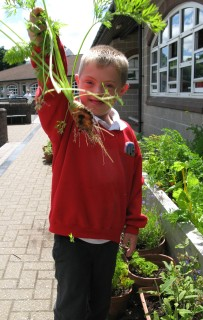 Kieran picks a carrot from a raised bed