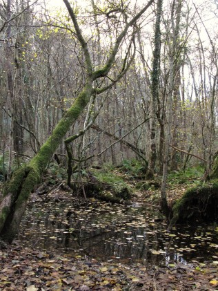 Water logged woodland is a wildlife haven