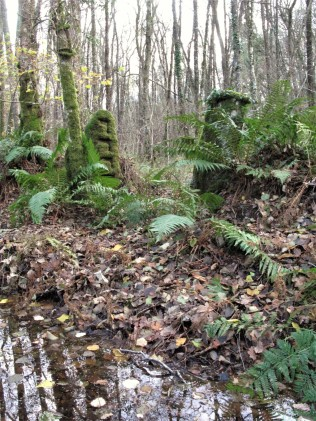 . Gateposts on a bank - heritage features stand in the wet woodland