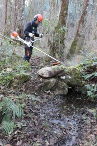 Beany brushcutting the ancient banks