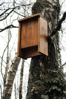 bat-box
