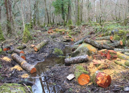 Bovey Valley logs