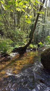 25.04.17 River Bovey_Emma Stockey