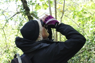Nikki inspecting and recording elm trees in Rudge Wood.