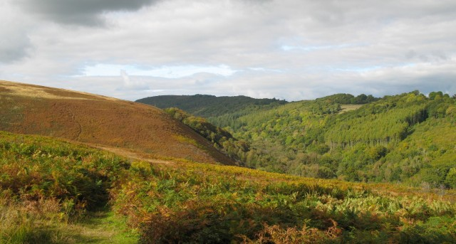 trendlebere landscape