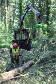 Martin felling large Douglas fir while Josh clears the brash and stacks timber