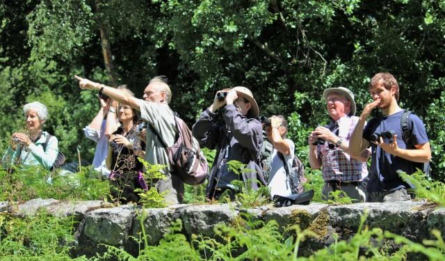 binoculars focussed on elm trees