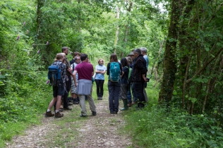 Discussions on timing woodland management work