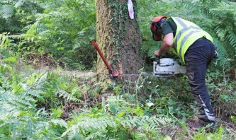 Felling Bovey Valley timber