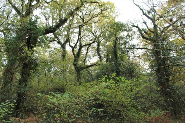 A beautiful ancient woodland at Becky Falls