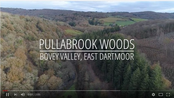 Pullabrook Wood film title