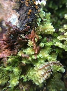 A garden of mosses and liverworts