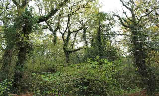 BVW healthy woodlandR