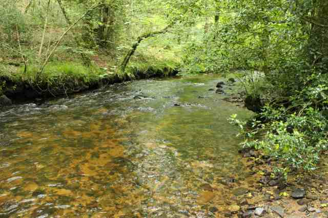 River Bovey upstream