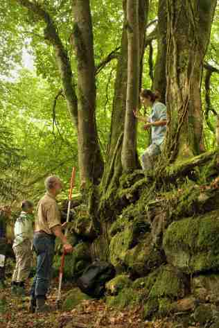 Beech was commonly planted along boundaries as a good marker tree