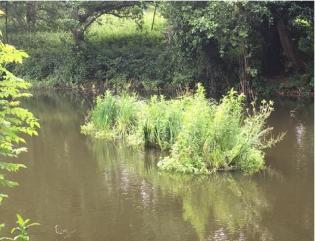 Raft2_Frog Environmental