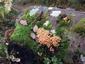 Fungi Foray Yarner_crop 2048px wide_Natalija Jovanovic
